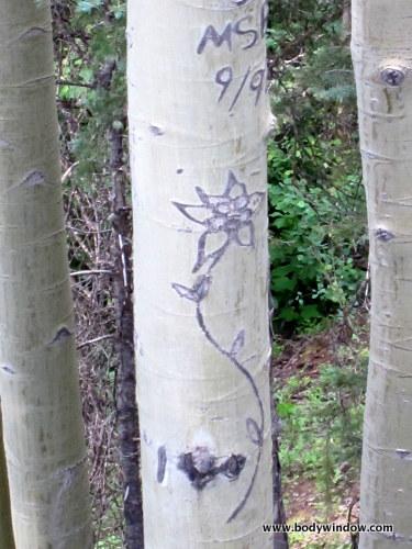 Columbine Carving on Aspen Tree marking the N. Pigeon Creek Trail Turnoff