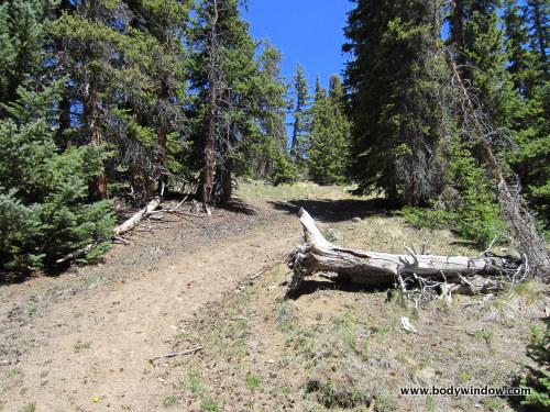 Steep Williams Creek Trail Through Pines