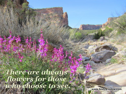 Devils Canyon Purple Loco Wildflower