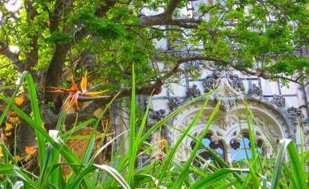 Bird-of-Paradise at the Quinta da Regaleira  palace in Sintra, Portugal