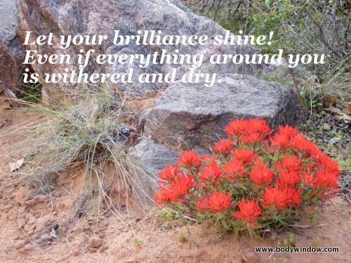 Devils Canyon Desert Paintbrush Wildflower