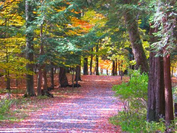 Autumn in New York State Park