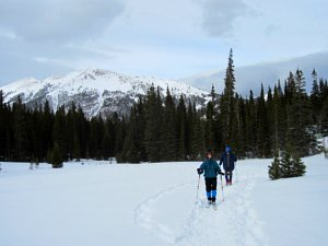 Cross country skiing a high meadow in northern Colorado