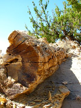 Petrified Wood in the Bisti Wilderness, NM