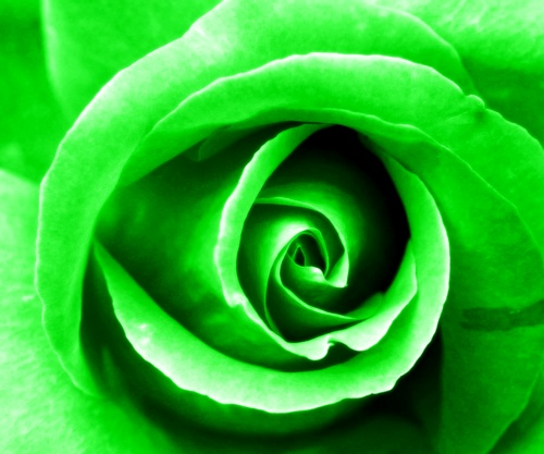 Green, 4th Chakra Rose