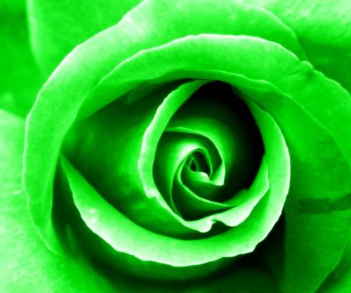 Green, 4th Chakra Rose