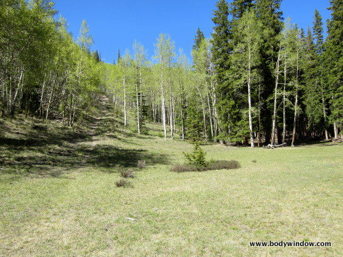 Idyllic High Meadow on Williams Creek Trail near Lake City, CO