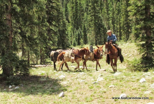 Pack Mules Bring up the gear on the Vallecito Creek Trail