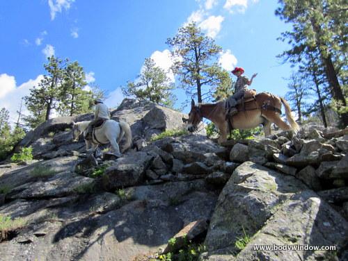 Switchbacks on the Vallecito Creek Trail on Horseback