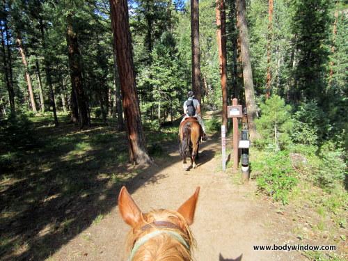 Vallecito Creek Trailhead Horseback Ride