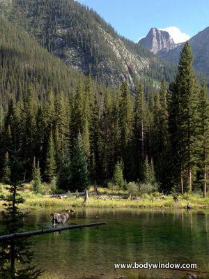 Vestal Peak at Beaver Ponds with moose