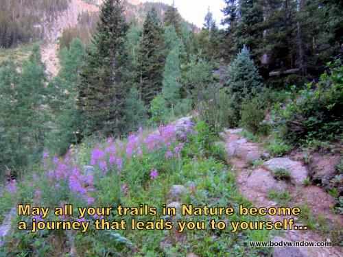 Fireweed Along Johnson Creek Drainage, San Juan Wilderness, Colorado